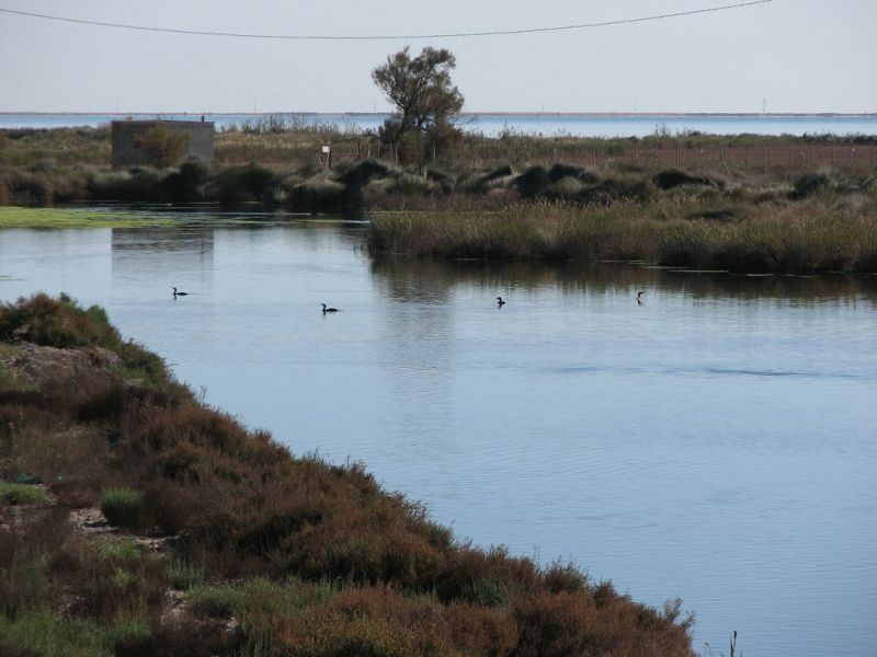 Tours of the Area: the Ebro Delta, San Carlos de la Rapita, the