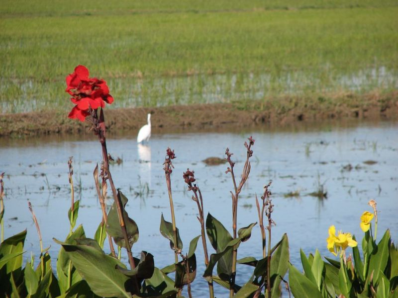 Recorreguts per la zona del delta de l'Ebre, Sant Carles de la Ràpita, Alcanar...