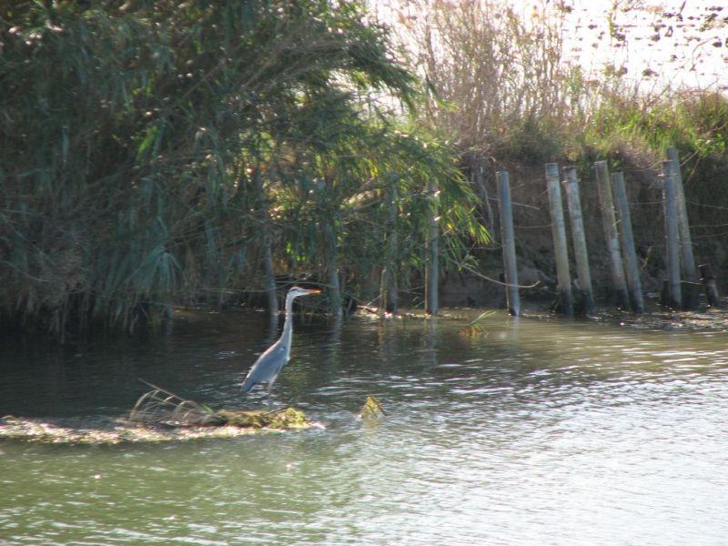 Itineraire Delta de l'Ebre sud: la Encanyissada, la Tancada,  la Punta de la Banya